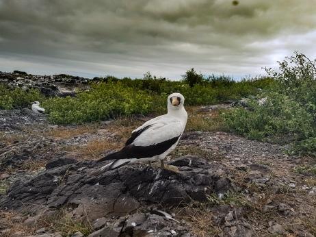Galapagy, Isla Floreana flora a fauna